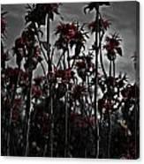 Mono Flowers Canvas Print