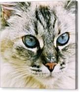 Pretty Blue Eyes--mia Canvas Print