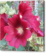 Red Hollyhock Canvas Print