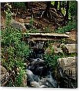 Stream In Tall Pines Canvas Print
