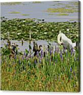 Swan And The Duck's Canvas Print
