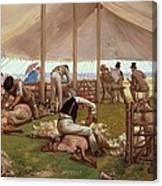 The Sheep Shearing Match Canvas Print