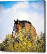 Wild Horse In The Sage Canvas Print