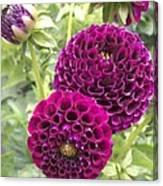 Wow Pink Dahlia Orbs Canvas Print