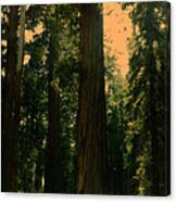 Yosemite Forest Canvas Print