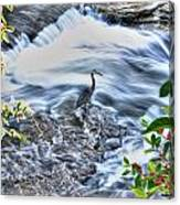 0005 Blue Heron At Glen Falls Williamsville Ny Canvas Print