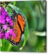 001 Making Things New Via The Butterfly Series Canvas Print