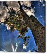 001 Reaching For The Sky Canvas Print