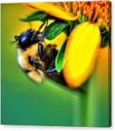 001 Sleeping Bee Canvas Print