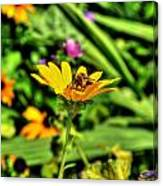 002 Busy Bee Series Canvas Print