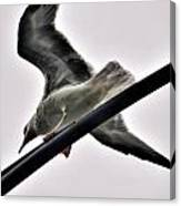 002 Gull To Out Do Wallenda Canvas Print