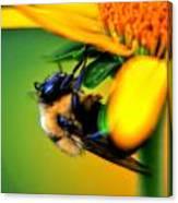 002 Sleeping Bee Series Canvas Print