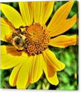 003 Busy Bee Series Canvas Print