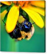 003 Sleeping Bee Series Canvas Print