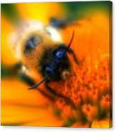 007 Sleeping Bee Series Now Awake   Ovo Canvas Print
