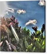 007 Summer Sunrise Series Canvas Print