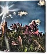 008 Summer Sunrise Series Canvas Print