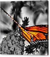 014 Making Things New Via The Butterfly Series Canvas Print