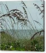 019 Sea Oats Canvas Print