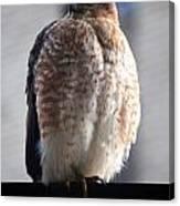 06 Falcon Canvas Print