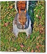 06 Grey Squirrel Sciurus Carolinensis Series Canvas Print