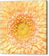 0625c Canvas Print