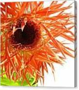 0690c-006 Canvas Print
