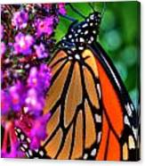 007 Making Things New Via The Butterfly Series Canvas Print