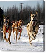 2011 Limited North American Sled Dog Race Canvas Print