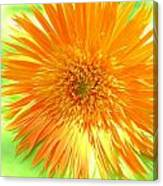 6174-001c Canvas Print