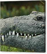 A Close View Of The Teeth Of An Canvas Print