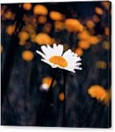 A Daisy Alone Canvas Print