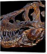 A Genuine Fossilized Skull Of A T. Rex Canvas Print