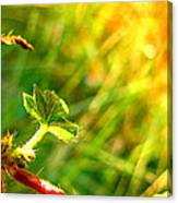 A New Morning Canvas Print