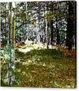 A Spot Of Sunlight Canvas Print