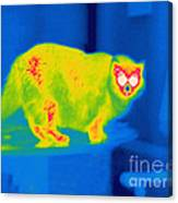 A Thermogram Of A Long Haired Cat Canvas Print