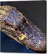 Alligator In Mississippi River Canvas Print