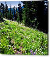 Alpine Meadow Vii At Mount Rainier Canvas Print