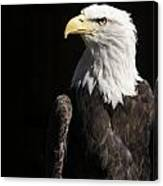 American Bald Eagle Canvas Print