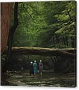 Amish Creek Hike Canvas Print