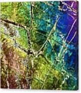 Amphibole Mineral, Light Micrograph Canvas Print