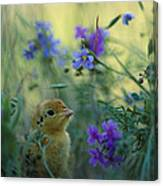 An Attwaters Prairie Chick Surrounded Canvas Print