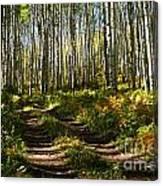 Aspen Dreamland Canvas Print