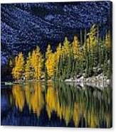 Autumn, Alpine Larch Trees, Lake Agnes Canvas Print