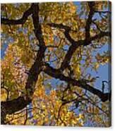 autumn Garry Oak Quercus garryana Klickitat County WA USA Canvas Print