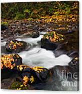 Autumn Passing Canvas Print