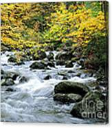 Autumn Stream 3 Canvas Print