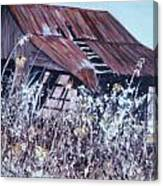 Barn in Sunlight Canvas Print