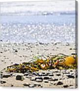 Beach Detail On Pacific Ocean Coast Canvas Print