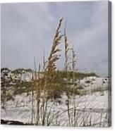 Beach Sand Dunes Canvas Print